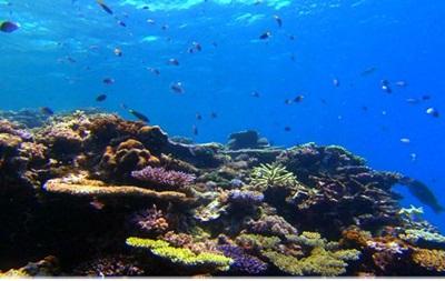 Корали Великого бар'єрного рифу масово біліють і гинуть
