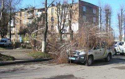 На Волині двоє чоловіків  повалили  дерево на авто поліції