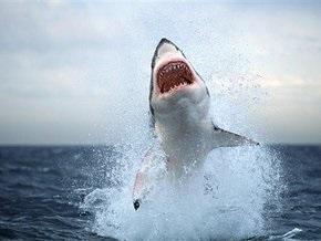 В Одессе откроют аквариум с океанскими акулами