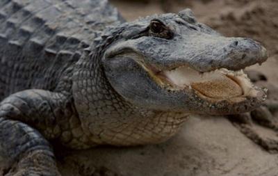У Флориді застрелили алігатора-монстра