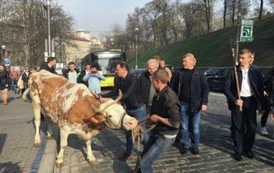 Фермери привели під Кабмін корів