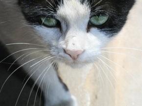 На Волыни бешеная кошка искусала четырех человек