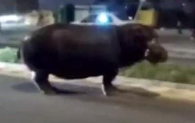 В Іспанії втік із цирку бегемот