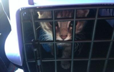 У Росії заарештували кота
