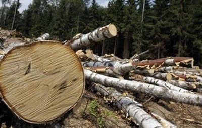 Кабмин запретил санитарную вырубку лесов