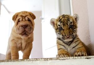 Сегодня - Всемирный день защиты животных