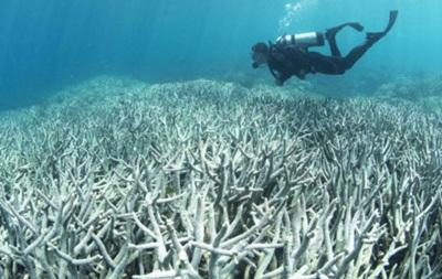 35% коралів Великого Бар єрного рифа вмерли через  знебарвлення