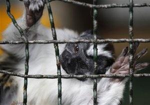 Новости США - странные новости: Нетрезвый житель Флориды проник в зоопарк и выпустил на свободу животных