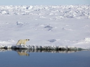 17-летний канадец почти сутки провел на дрейфующей льдине с двумя белыми медведями