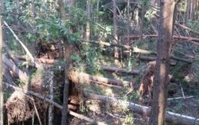 Ураган на Черниговщине повредил 500 гектаров леса