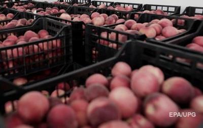 На Львовщине из-за гусениц уничтожили пять тонн персиков из Польши