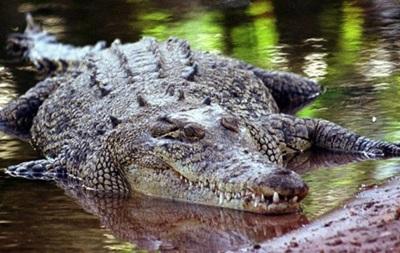 Австралиец провел на острове три дня из-за нападения крокодила