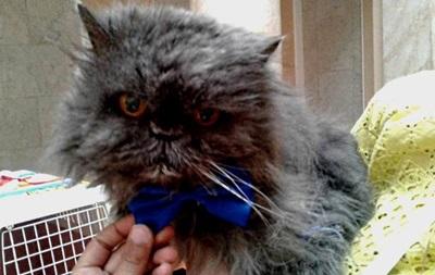 В Украине умер самый старый кот