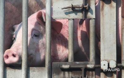 У трьох областях зафіксовано спалах чуми свиней
