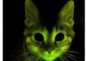 Светящаяся зеленая кошка поможет разработать лекарство от СПИДа