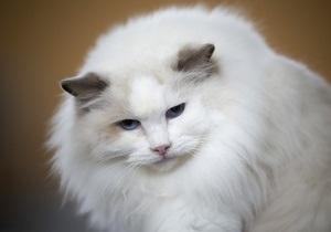 Новости России: В России кот устроился на работу в детскую библиотеку