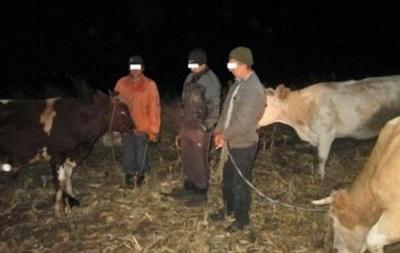 На Луганщині намагалися нелегально переправити корів у РФ