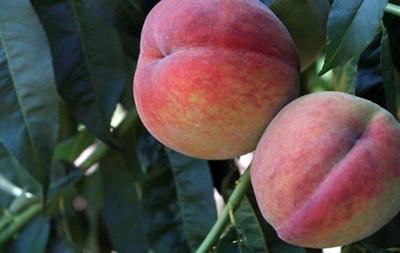 РФ снимает ограничения на ввоз фруктов из Турции