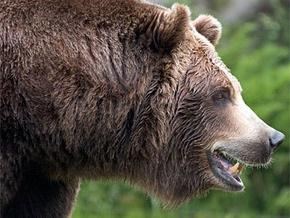 В двух российских поселках введен комендантский час из-за медведей