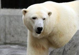 На Аляске кандидатами в президенты зоопарка стали медведица и волк