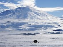 Антарктиду атакуют чужеродные организмы