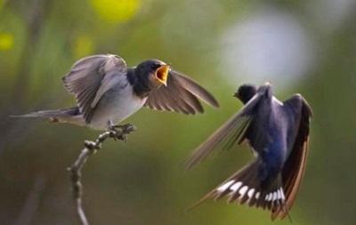 Птахи змінюють час міграцій через глобальне потепління - вчені