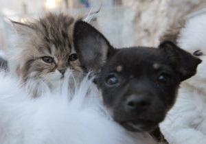 Кошки против собак: Яндекс изучил запросы украинцев о домашних животных