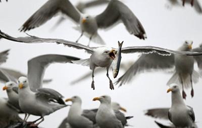 У Нью-Йорку вбили 70 тисяч птахів для безпечних польотів