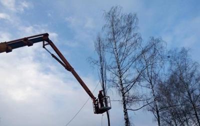 В Киеве вырубают деревья возле снесенного кинотеатра Нивки