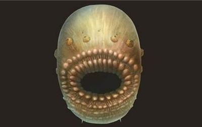 Учені знайши крихітного  найстарішого предка людини
