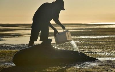 Близько ста китів, які викинулися на берег у Новій Зеландії, врятовані