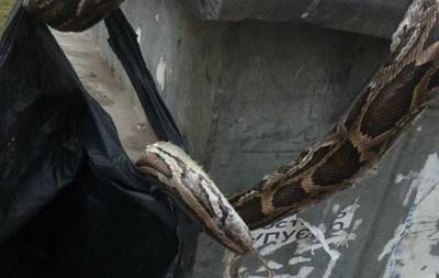 У Києві викинули в сміттєвий бак мертвого удава
