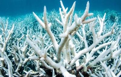 Великий Бар єрний риф біліє через потепління