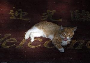 В Калифорнии нашли дом приплывшему на судне из Китая коту