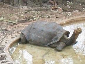 Британский принц Чарльз проведает последнюю гигантскую галапагосскую черепаху