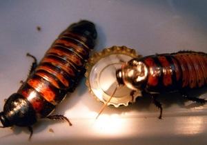 Глюкоза уже не привлекает тараканов - ученые