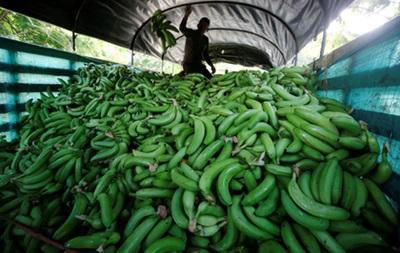 В Іспанії знайшли 17 кг кокаїну в ґумових бананах