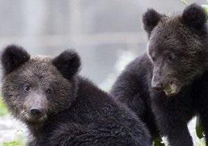 В Киевском зоопарке открыли медвежатник