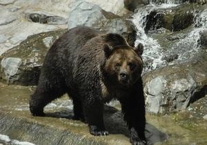 Киевский зоопарк планирует поменять медведей на других животных