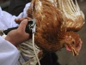 Птичий грипп зафиксирован в Канаде
