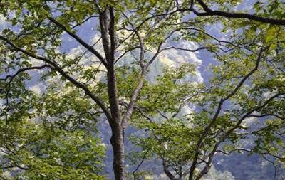 Науковці визначили, скільки видів дерев існує у світі