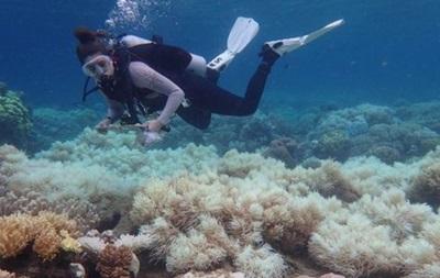 Великий Бар єрний риф втрачає барви - вчені