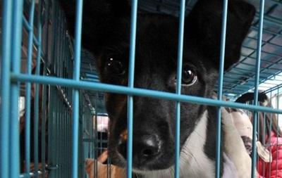 На Тайвані заборонили їсти собак і котів