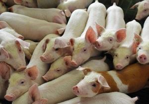 В Сумской области во время пожара на ферме Лебедь погибли 152 свиньи и четыре коровы