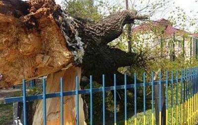 У школі Вінниці впало дерево, є постраждалі