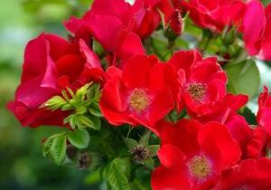 Цветочники Украины заявили об увеличении стоимости таможенного оформления цветов в пять раз