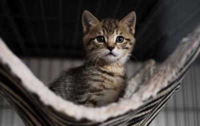 У Франції понад 200 кішок отруїли невідомою отрутою