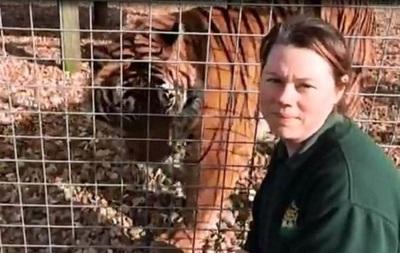 У Британії не присиплять тигра, який убив робітницю зоопарку