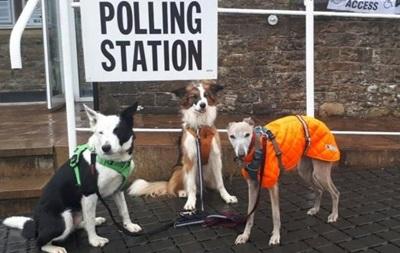 У Британії хештег #СобакиНаВиборах б є рекорди в соцмережах