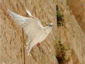 В Иране пойманы два голубя, шпионившие вблизи ядерных объектов